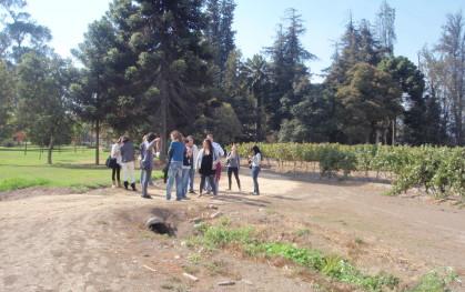 Camino a los viñedos