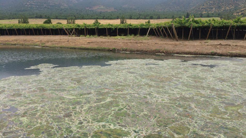 Tranque con lama, campo San Felipe